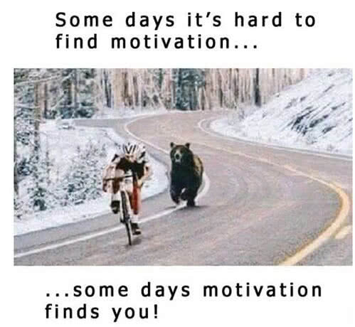 bear chasing bike motivation